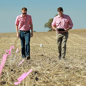 Elders wheat farm pinkshirts