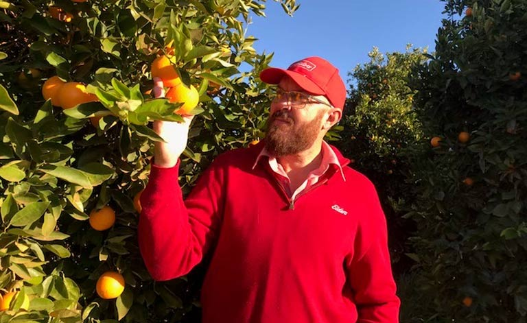 rolf-inspects-oranges-on-a-tree