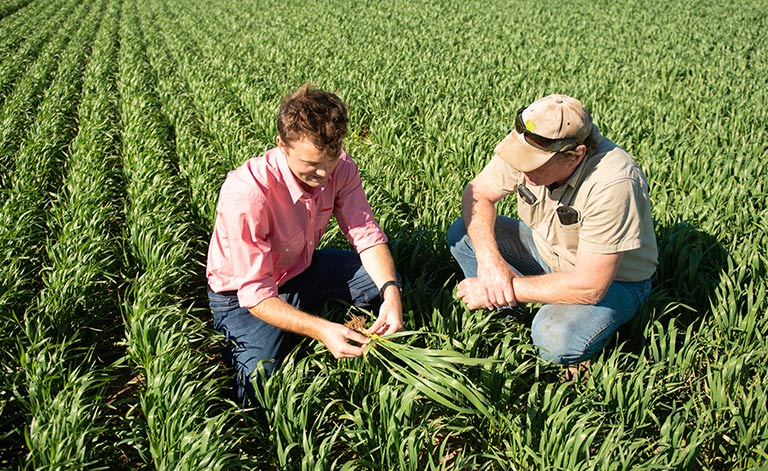 two-men-crouching-down-inspecting-crops